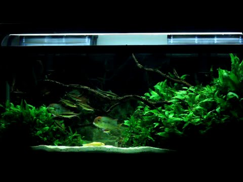 The 55 Gallon Planted Tank