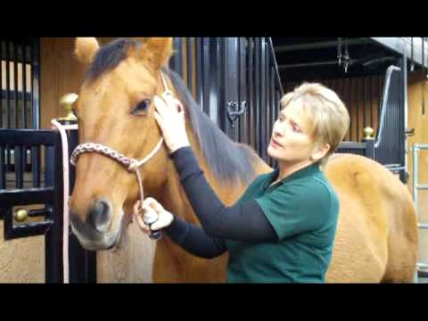 Helping Horses with Head Shaking, Spooking, Auto Immune, & Allergies Cranial Sacral - April Battles