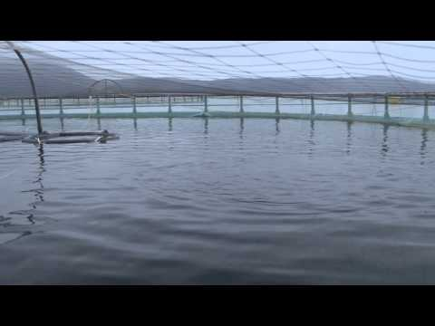 Responsibly Farmed Salmon | Fed Better - Raised Better | Whole Foods Market