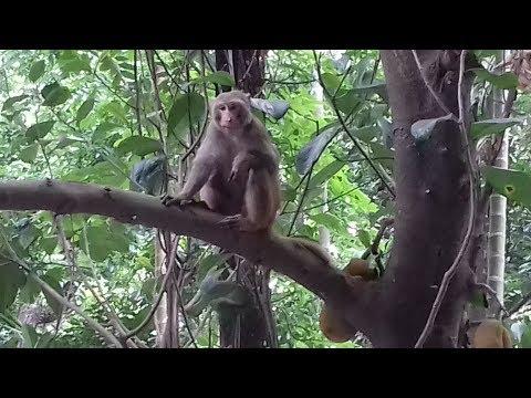 Monkey in rdrs rangpur office