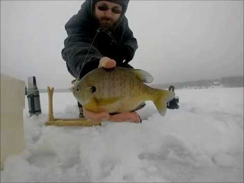 Ice Fishing for Big Bluegills early December 2014