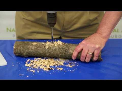 How to Make a Winter Bird Feeder?