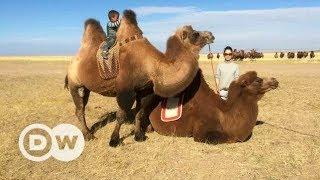 A journey through Mongolia | DW Documentary