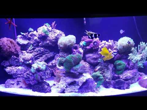 72 gallon bowfront reef tank