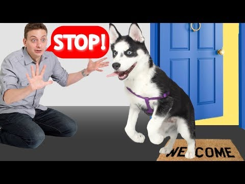 How To Train Your Dog to STOP Running Out of the Front Door! (Stay at Door)