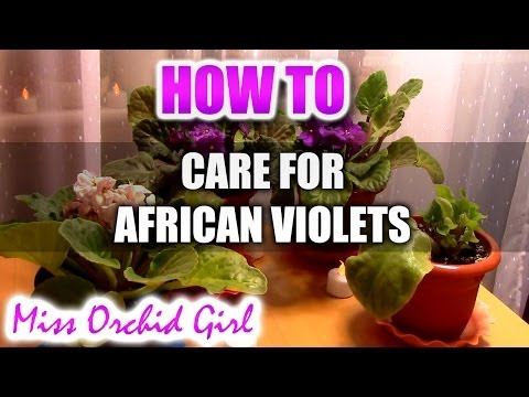 How to care for African Violets and more