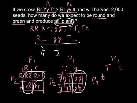 How to calculate a genotype with a Rule of Probability