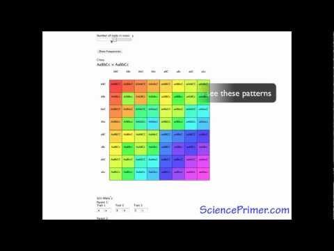 Punnett Square Calculator Overview