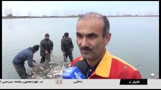 Iran Fishing in wetlands, Mazandaran province ماهيگيري در آب بندهاي استان مازندران ايران