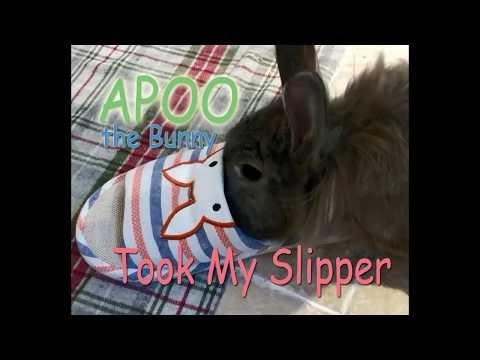 Apoo the Bunny Took My Slipper...