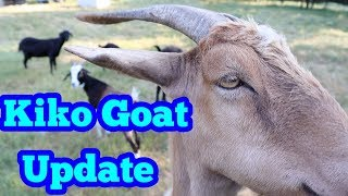 Kiko Goats Meat Video - PlayKindle org