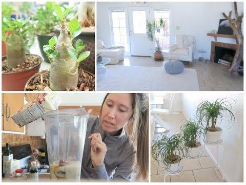 Vlog | Coffee Frappe Recipe | Houseplant Decor