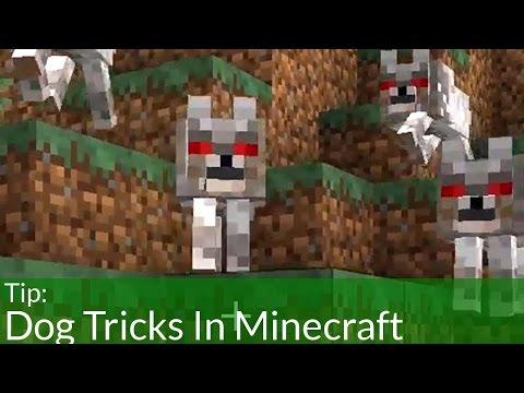 Dog Tricks In Minecraft
