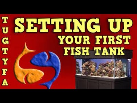 Setting Up Your First Fish Tank ,  Ultimate Guide To Your First Aquarium Part 4