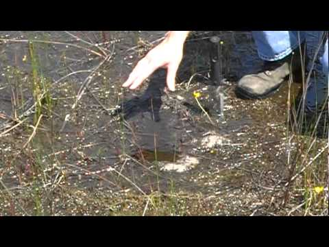 Episode 1: Hunt for the Freshwater Clam