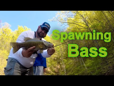 Fishing for Spawning Smallmouth Bass