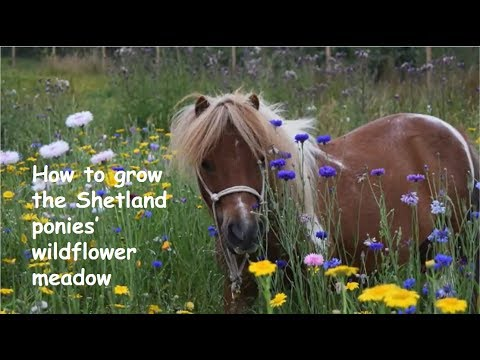 How to grow the Shetland ponies' wildflower meadow - TV 134