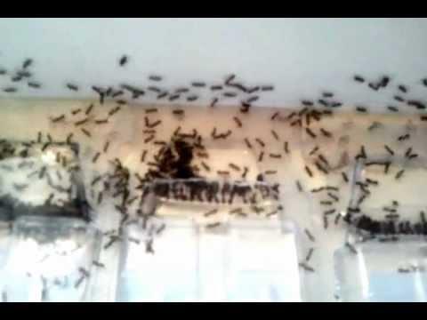 Ants,lots of little black ants.