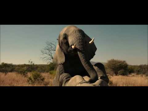 Xxx Mp4 The Brothers Grimsby Elephant Scene 3gp Sex