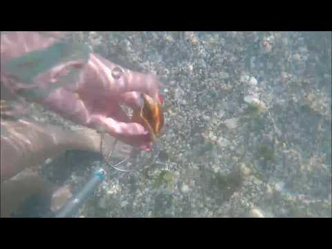 Finding Shells and Shark's Teeth using an Ocean Viewer in Venice, FL