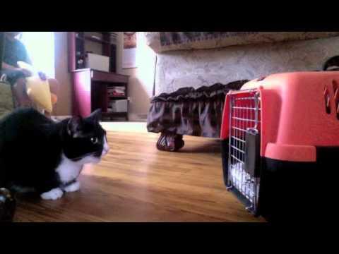 My Cat meeting the new kitten