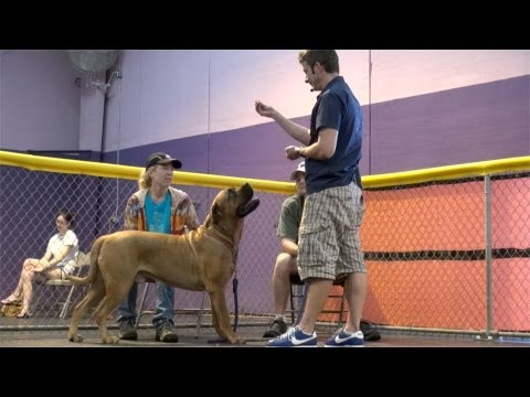 What Are The First 3 Things You Should Teach Your Dog?