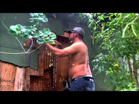 Africanized honey bee attack hive removal Donna, TX- by Luis Slayton of Bee Strong Honey Bee Removal
