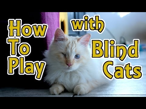 how to play with a blind cat / can blind cats be happy