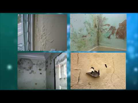 A solution of damp wall and termite wall