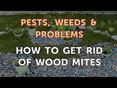 How to Get Rid of Wood Mites