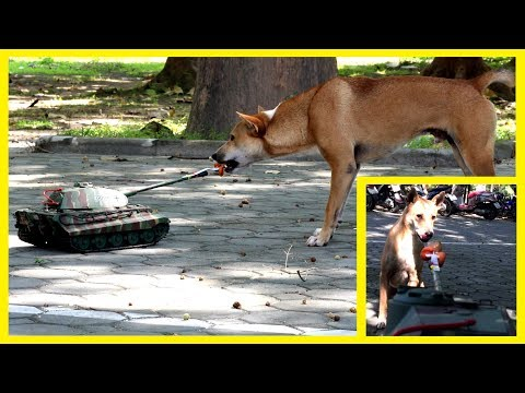 Dogs and Remote Control Tank | Funny Animal Reaction