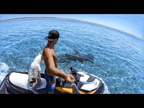 YBS Catch And Cook Ep 2 - Crayfish + Mangrove Jacks, Hammerhead Shark And A Dingo