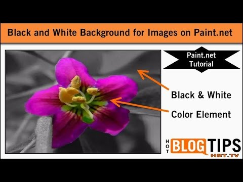 Black and White Background for Images Paint.net