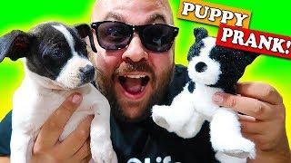 Magic Halloween Puppy Prank!