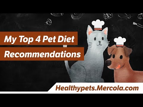 My Top 4 Pet Diet Recommendations