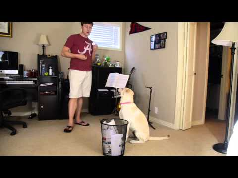 Dog Training: Put Items In The Trashcan
