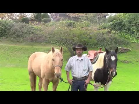 Curing Separation Anxiety in Horses, Mike Hughes, Auburn California