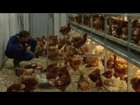 Poultry Management