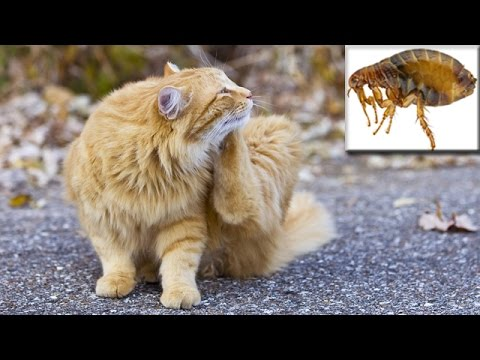 Steve Dale: Keeping Fleas Off Your Cats