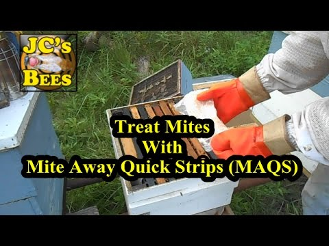 Treating Mites With Mite Away Quick Strips (MAQS)