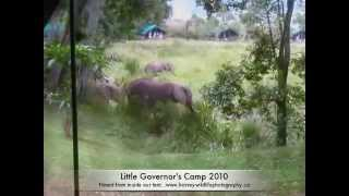 Elephants At Little Governor