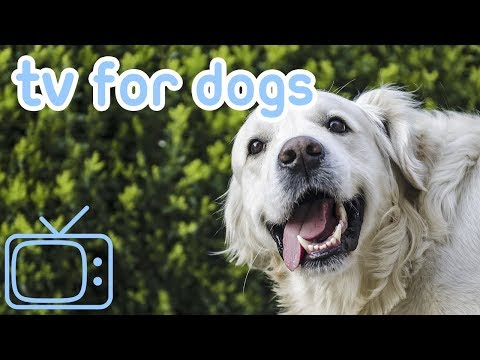 Meerkat and Sheep TV for Dogs! Entertain Your Dog with This Calm Footage of Sheep and Meerkats!