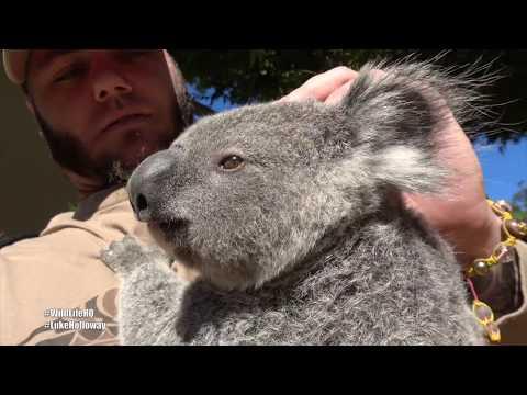 Hanging out with Koalas & Kangaoors @ Wildlife HQ Australia