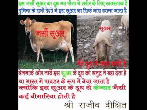 don't drink jarsi cow milk By Rajiv Dixit