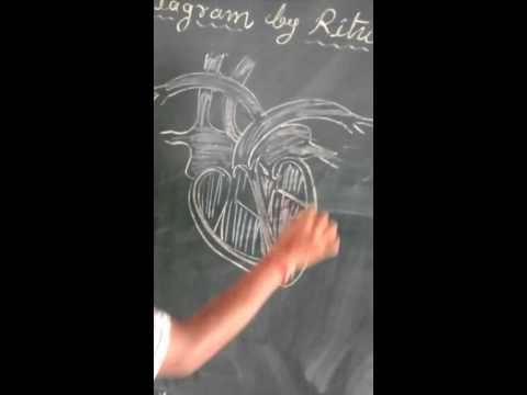 Easy Making diagram of heart with Rituraj