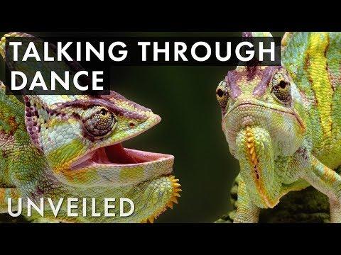 Weirdest Ways Animals Talk to Each Other