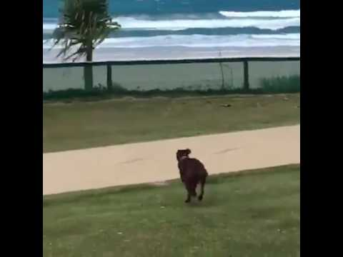 Dog Jumps Fence to Get to Beach