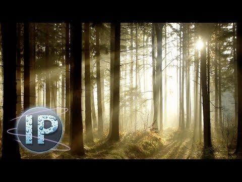 Adobe Photoshop Elements Sun Ray Effect Photoshop Elements Tutorial 10 11 12