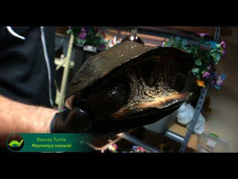 Unusual Hybrid Turtles: A Happy Accident