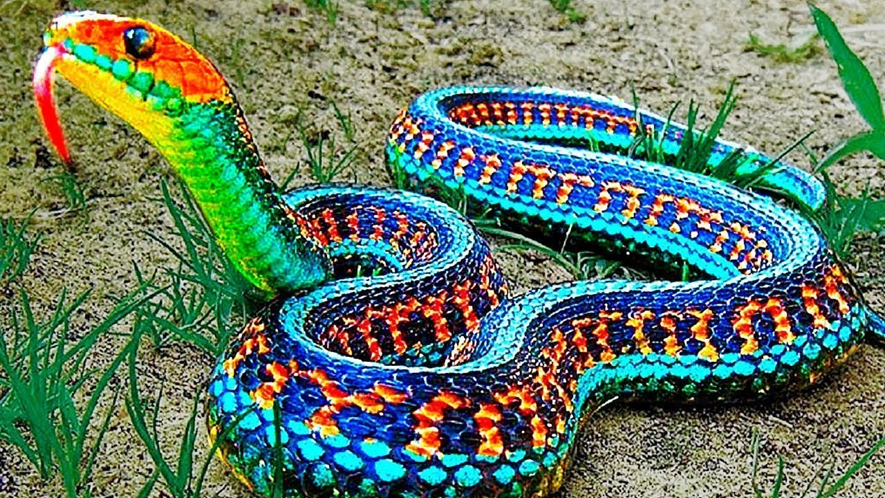 15 Rarest Snakes In The World!
